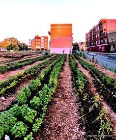 photo 4 truck garden