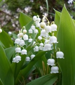 photo 2 lilies